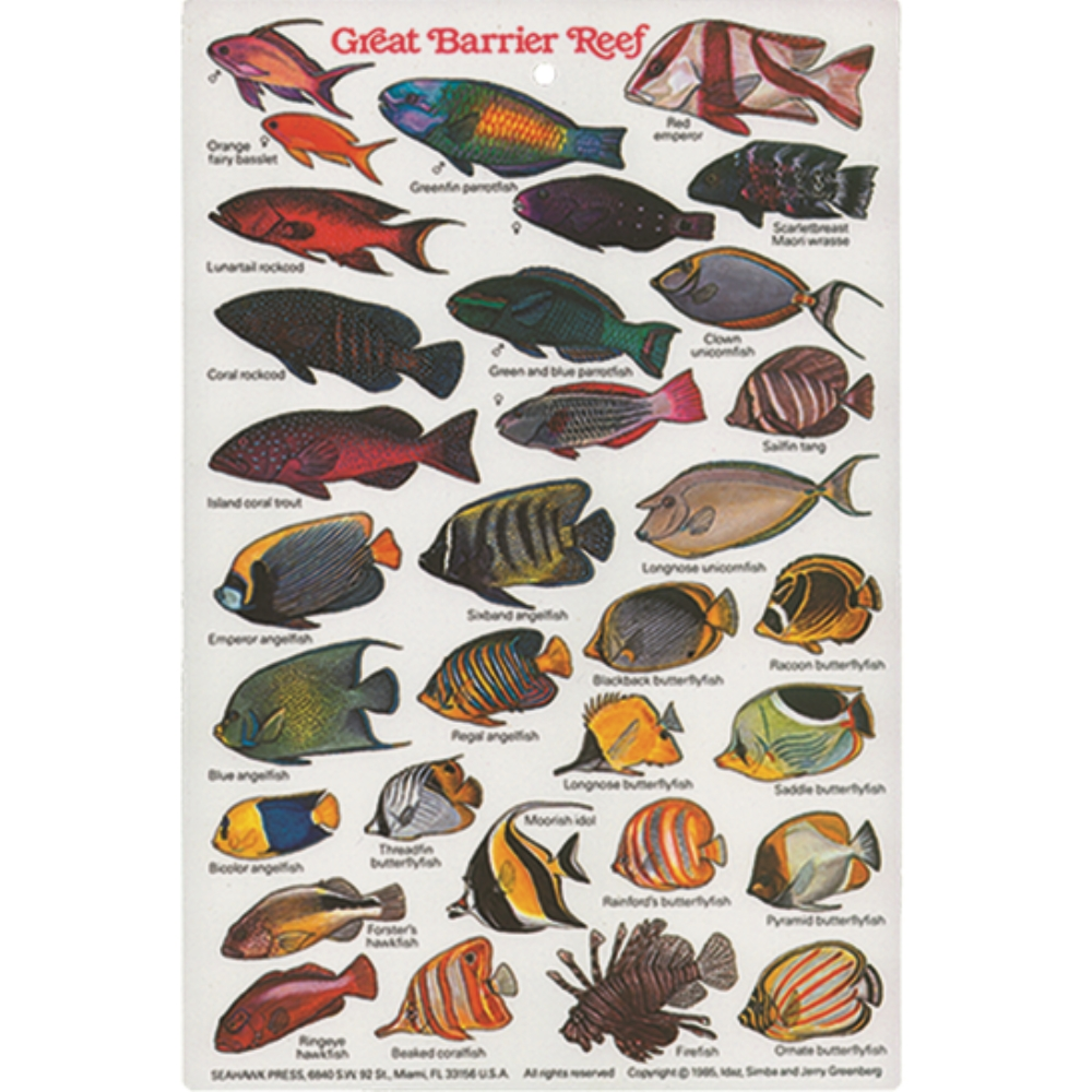 mexico field guide reef fish
